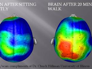 Reaktion des Gehirns auf Bewegung - Quelle: (c) Dr. C. Hillman